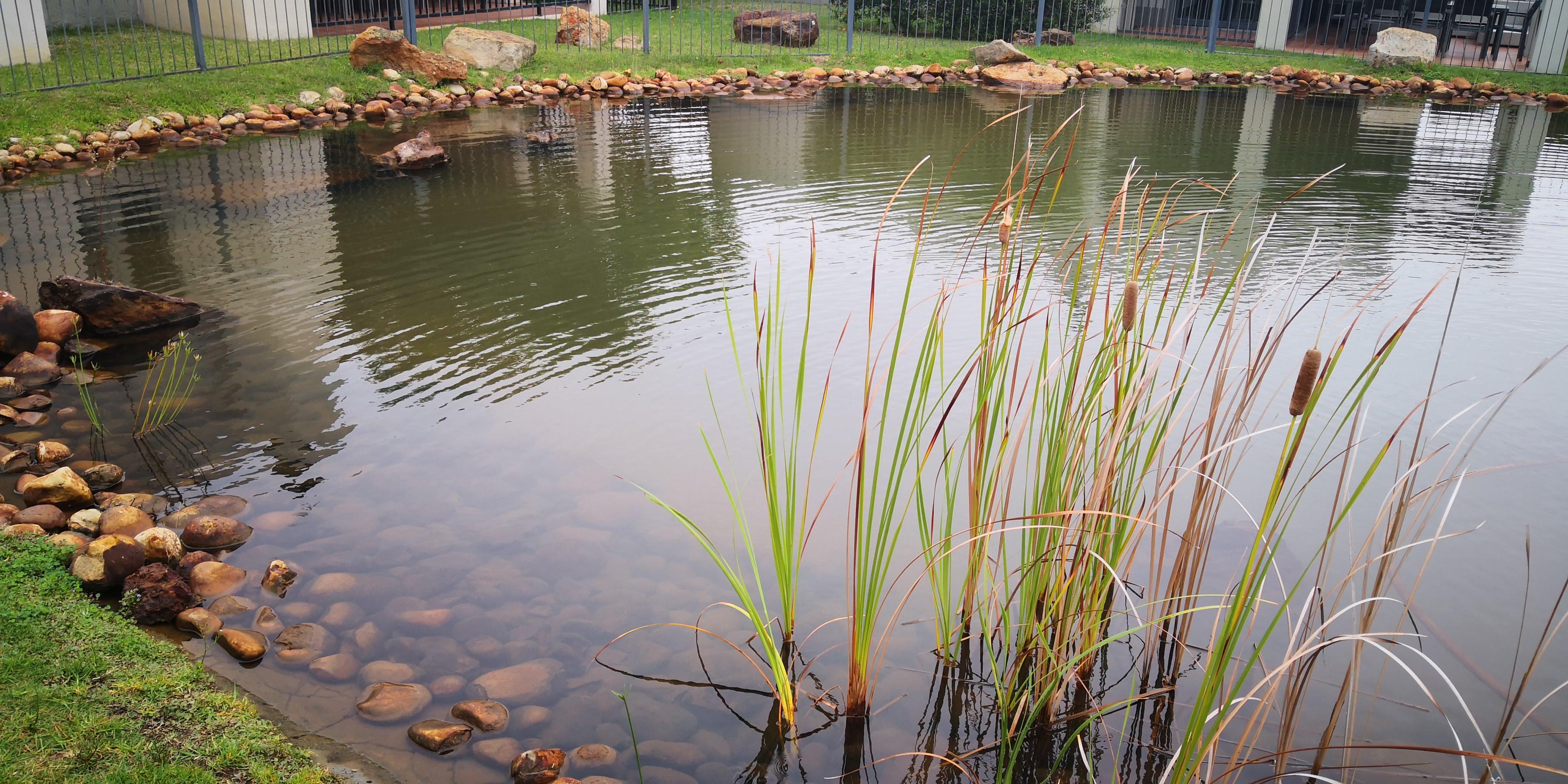 Pond After Ozone & Filtration