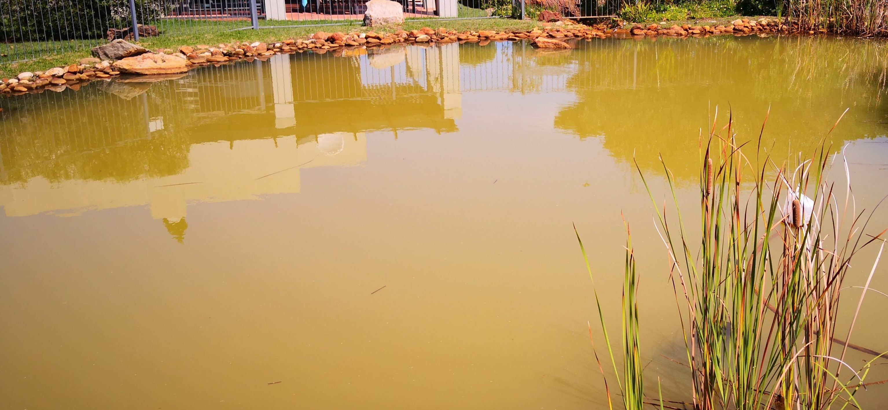 Pond with High Iron Levels